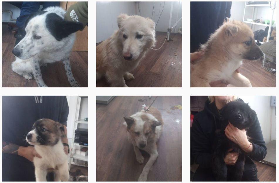 Мэрия Якутска: с городских улиц отловлено 42 собаки